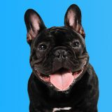 Loja online para pets: vale a pena investir?